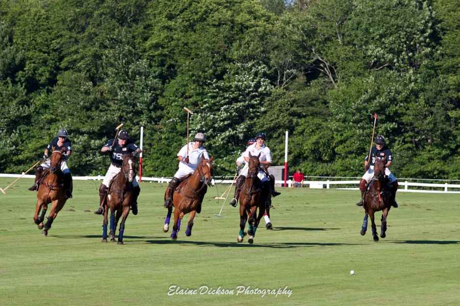 Polo: The Sport of Horses